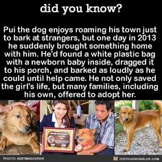 Pui is my hero! didyouknowblog