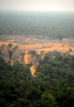 Irradication of the world's Rainforests.