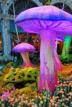 <3 Mushroom Art, Mushroom Fungi, Mushroom Seeds, Giant Mushroom, Belleza Natural, Psychedelic Art, Alice In Wonderland, Wonderland Party, Stuffed Mushrooms