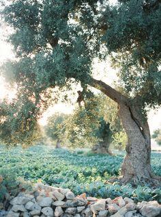 Organic Outdoor Wedding in Italy