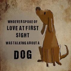 Whoever spoke of love at first sight was talking about a dog.