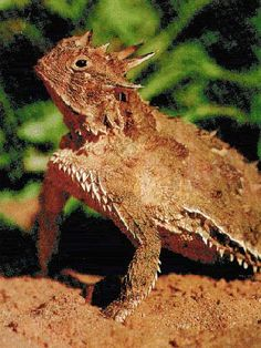 how to keep lizards away