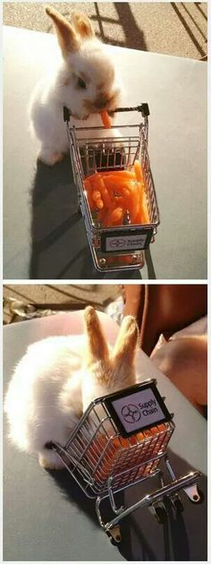 Oh My God This Bunny Rabbit Is Using A Tiny Shopping Cart