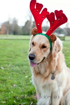 Dogs, christmas session, christmas, perros, navidad, fotografia mascotas, mascotas, pet, christmas photography