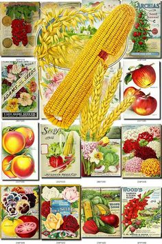 SEEDS-70 Catalogs Covers Collection with 99 vintage images Corn Wheat Oats Watermelon plate in High resolution digital download printable           data-share-from=listing        >           <span class=etsy-icon