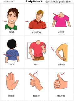 Body Parts - English vocabulary