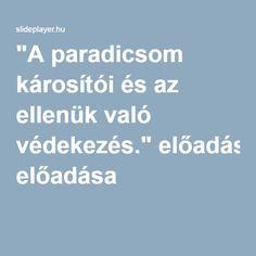 """""""A paradicsom károsítói és az ellenük való védekezés."""" előadása"""