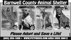 Barnwell County Animal Shelter ad for September 11, 2013
