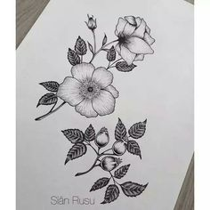 Rosehip, flowers