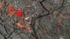 nature # 8 - Limited Edition of 1 Photograph Saatchi Art, The Originals, Fall, Photography, Painting, Color, Autumn, Photograph, Fall Season