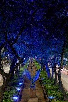 Hermosa calle iluminada de azul para caminar se encuentra Paseo de la Reforma D.F en #México City Laura casarez Cazares Beautiful blue illuminated street walking is Paseo de la Reforma in Mexico City Tour By Mexico - Google+