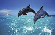 Výsledek obrázku pro dolphins