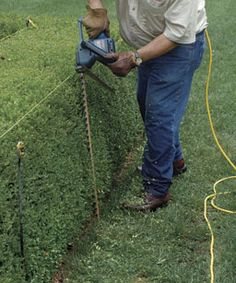 Trimming a Hedge: For straight sides and a flat top, use stakes and string as a guide. Get some tips here http://www.finegardening.com/how-to/articles/trimming-hedge.aspx