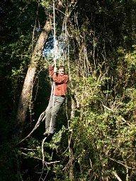 Woodbush Forest Reserve, Magoebaskloof (4hrs)