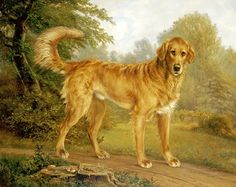 Global Gallery A Golden Retriever On a Path by Niels Aagaard Lytzen Framed Painting Print Size: Painting Frames, Painting Prints, Art Commerce, Street Artists, Banksy, Dog Treats, Best Dogs, Paths, Canvas Art