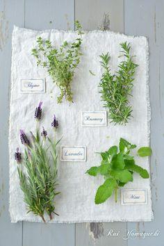 ハーブ グリーン #herb #green