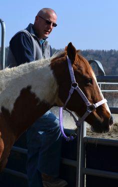 Hr. Klaus Fischer Horses, Animals, Animais, Animales, Animaux, Horse, Animal