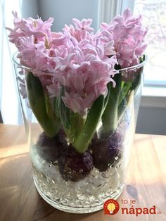 Grow hyacinth with just water put rocks or decorative rocks on bottom of large glass vase arrange bulbs and add water to bottom of bulbs blooms in around 2 weeks add water as needed never submerge whole bulb in water spring indoors during the winter time Indoor Flowers, Bulb Flowers, Indoor Plants, Tulpen Arrangements, Floral Arrangements, Holiday Door Decorations, Large Glass Vase, Indoor Water Garden, Tulip Bulbs