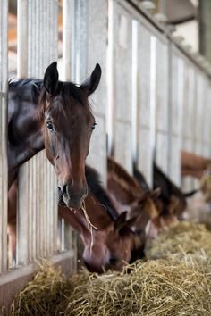 IMPORTANT: Here at Emerald Valley Stables we are looking for help. Someone who is willing to feed horses, clean stalls, pick pastures, clean tack, tack and groom horses, sweep, organize, and exercise horses. You can be a working student and work for free lessons. Please contact me as soon as possible.(Comment below)