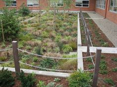 raingarden. portland.: Rain Garden, Ecology, Portland, Planters, Outdoor Structures, Basins, Landscape, Urban Design, Green