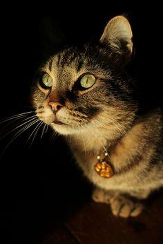 Mr. Stinker cat
