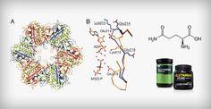 گلوتامین و عوارض آن + شیوه صحیح مصرف - گلوتامین یک اسید آمینه (یک بلوک ساختمان پروتئین) است که به طور طبیعی در بدن یافت می شود.گلوتامین جزو اسیدهای آمینه ضروری نمیباشد با این حال در برخی موارد به مانند بعضی از بیماریهای گوارشی …
