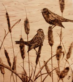 "Julie Bender Pyrography: ""Tall Tails"" birds in cattails. Burned maple wood."