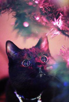Christmas tree light hypnosis....