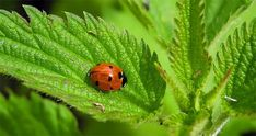 zhannadesign direction: Help Guide You Toward a Life You Love Nature Animals, Business, Building, Life, Lady Bugs, Sweet, Beauty, Medicine, Ladybugs