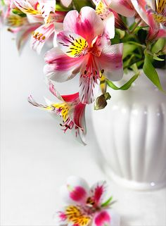 Photograph Pink alstroemeria by Irina Novosyolova on 500px