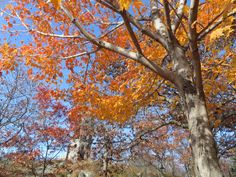 Fall scene, Enger Tower in back ground, Duluth, MN