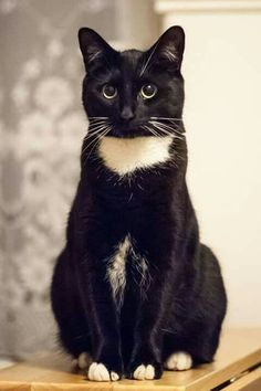 Barb, the black cat - Katzen - Cute Cats And Kittens, I Love Cats, Crazy Cats, Cool Cats, Kittens Cutest, Ragdoll Kittens, Tabby Cats, Funny Kittens, Bengal Cats