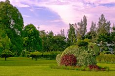 Taman Bunga Nusantara (Flower Garden), Cipanas - West Java - Indonesia