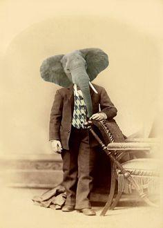 Vintage Elephant 5x7 Print