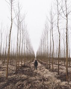 Boardman Tree Farm