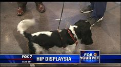 For Your Pet: Hip displaysia - http://austin.citylocalbuzz.com/for-your-pet-hip-displaysia/