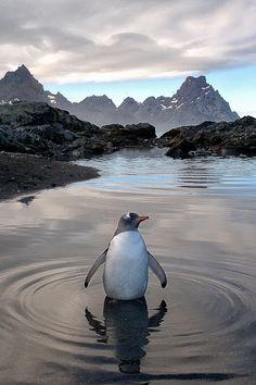 En que tablero deberia ir esta foto? En animales o en Paisajes... Que opinas?