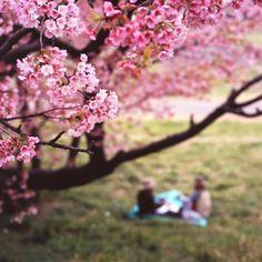8 razones por las que viajar a Japón en primavera. Los cerezos en flor son sólo la primera de ellas...