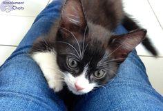 Bien éduquer un chaton demande de la discipline, de la patience, et pour certains, du self-control. J'ai un principe, que j'appelle une éducation de base, qui fait de tout chaton une crème ! Ne pas mordre, ne pas griffer, se laisser manipuler