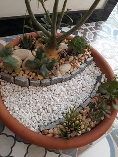 how to get a christmas cactus to flower Succulent Planter Diy, Succulent Gardening, Garden Terrarium, Cacti And Succulents, Planting Succulents, Small Garden Fairies, Small Water Gardens, Eco Garden, Dish Garden