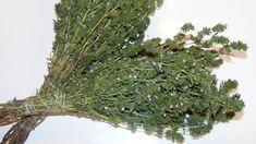 Reumatismul nu este o afectiune care ii afecteaza doar pe cei mai in varsta, asa cum se crede. Durerile apar in special in sezonul rece, din cauza Spices And Herbs, Natural Treatments, Cactus Plants, Good To Know, Asparagus, Vegetables, Health, Slytherin, Aesthetics