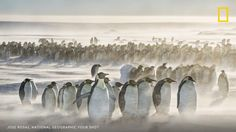 This colony of emperor penguins star in one of our recent editor picks. Could your photo be next? #flights & #hotels #Cruises #RentalCars #mexico #lajolla #nyc #sandiego #sky #clouds #beach #food #nature #sunset #night #love #harmonyoftheseas #funny #amazing #awesome #yum #cute #luxury #running #hiking #flying
