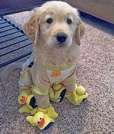 Posted by @puppyofday