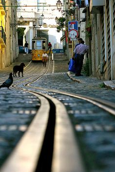 Your ancient paths meander across time... across the wildness of earth's vibrations... calling the wandering ones home... home to your strong arms, sweet Lisboa... xo