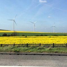 https://flic.kr/p/rYya5G | Amazing fields of yellow as we drove on the A1 in the UK today :) #upsticksandgo #yellow #travel #a1 #unitedkingdom #michfrost #naturephoto #roadtrip