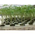 Termékek Plants, Plant, Planets