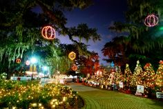 """From late Nov. through Jan.1 there is """"Celebration in the Oaks."""" (in City Park)  So many lights !  Closed Christmas Eve and New Year's Eve.  About 7 dollars per person and children under 3 are free. Open 6-11 or 6-10 depending on the day of the week.  Buy hot buttered rum, take rides, see Santa........ You can immerse yourself in the Season here and in New Orleans as a whole very easily."""