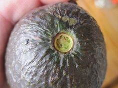 How to Tell If an Avocado Is Ripe  Flick the small brown stem off the top of the avocado. If it comes off easily and you can see green underneath it, the avocado is ripe! If the stem doesn't come off or if you see brown, the avocado is not ripe.