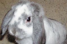 La fin de l'expérimentation animale dans la recherche médicale ?