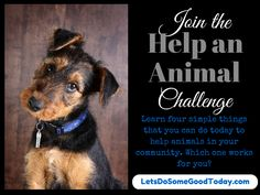 Join the Help an Animal Challenge - learn simple ways that you can help serve the animals in your community!